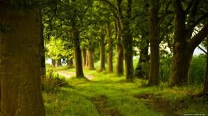wallpaper-forest-trail-savers-screen-spring-beach-nature-wallpapers-array-wallwuzz-hd-wallpaper-3499